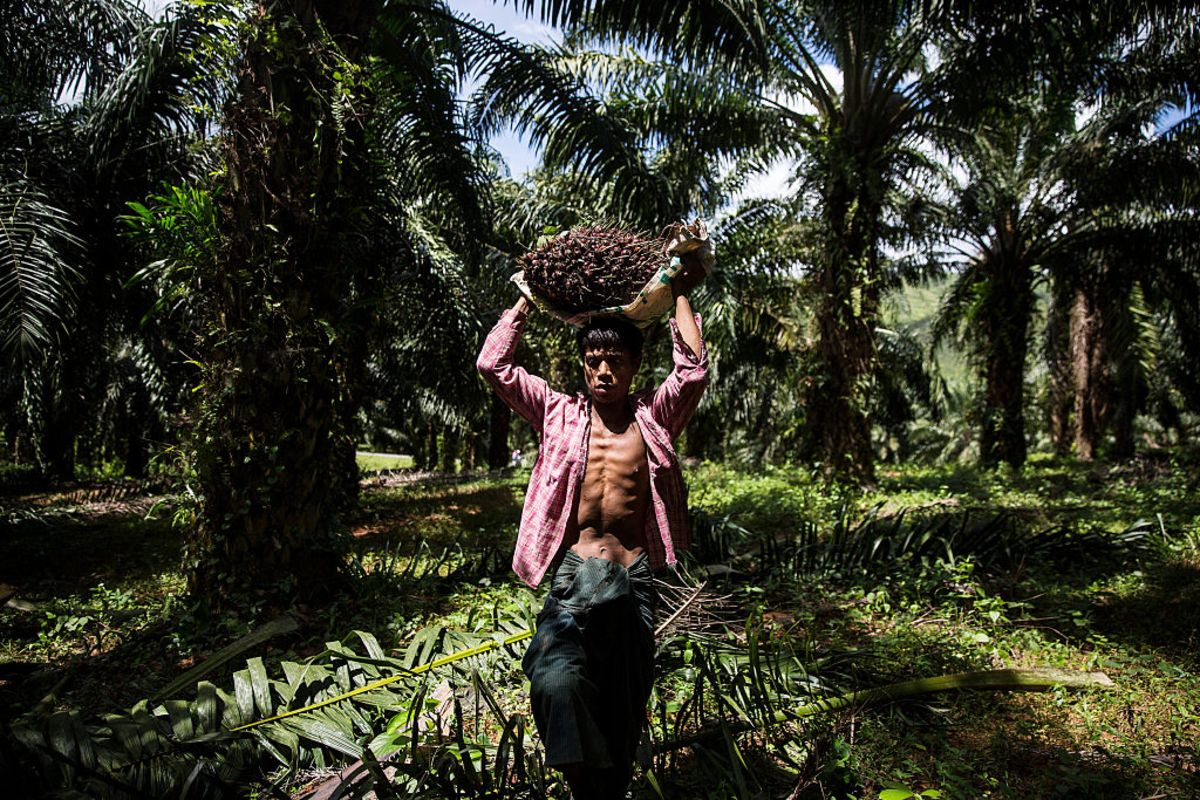 Britain Should Break With Europe on Palm Oil