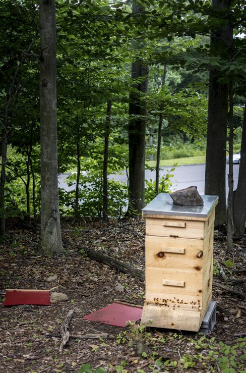 One of OEC's beehives in their apiary, used to help pollinate all of their fruits and start to produce small quantities of delicious honey.