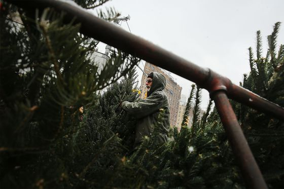 Christmas Tree Sellers Run Into Surprise Covid Costs