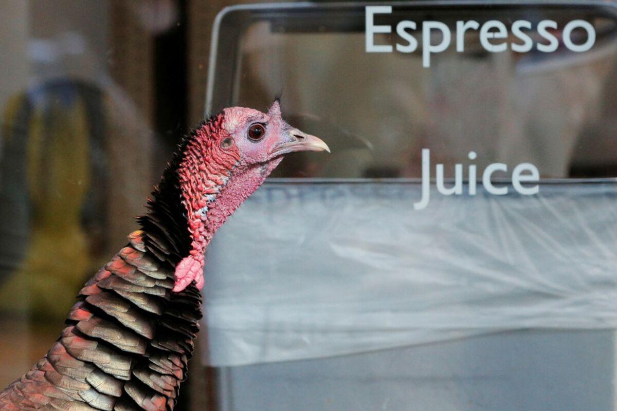 Turkeys In Your Neighborhood Get Used To It Bloomberg