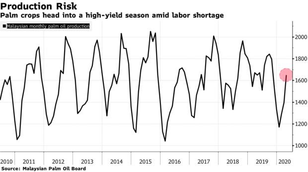 Palm crops head into a high-yield season amid labor shortage
