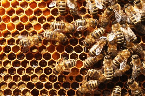 In a Bid to Save Bees, Europe Bans Some Pesticides
