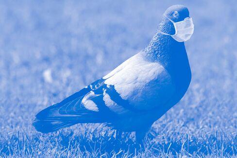 Bloomberg View: Good News About Bird Flu