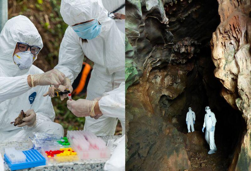 virus bat cave china handouts