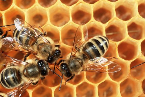 Honey is essentially bee vomit, but many people are happy to eat it.