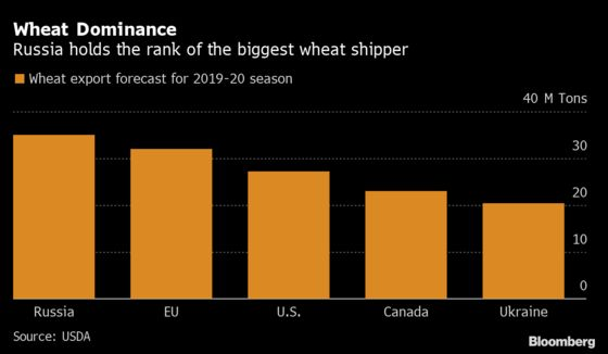 Wheat Heads for Weekly Gain While Russia Considers Export Limits