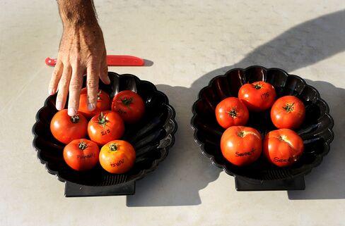 Monsanto Genetic 'X-Ray Glasses' Speed Breeding of Tomatoes