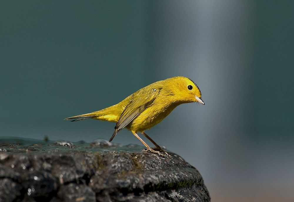 Frackers Get Not One But Two Coal-Mine Canaries