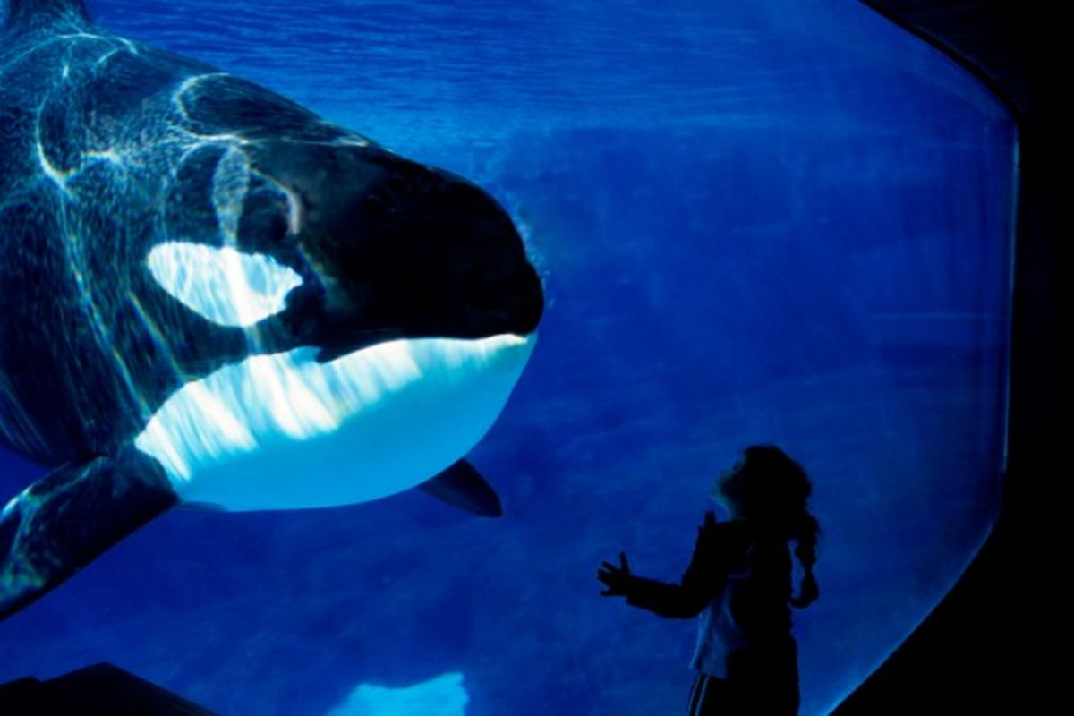 a discussion on the issues related to the seaworlds decision to ban orcas from entertainment purpose Seaworld district politician is stalling on bill would ban performance-based entertainment for the 10 the issues are complex and the committee took.