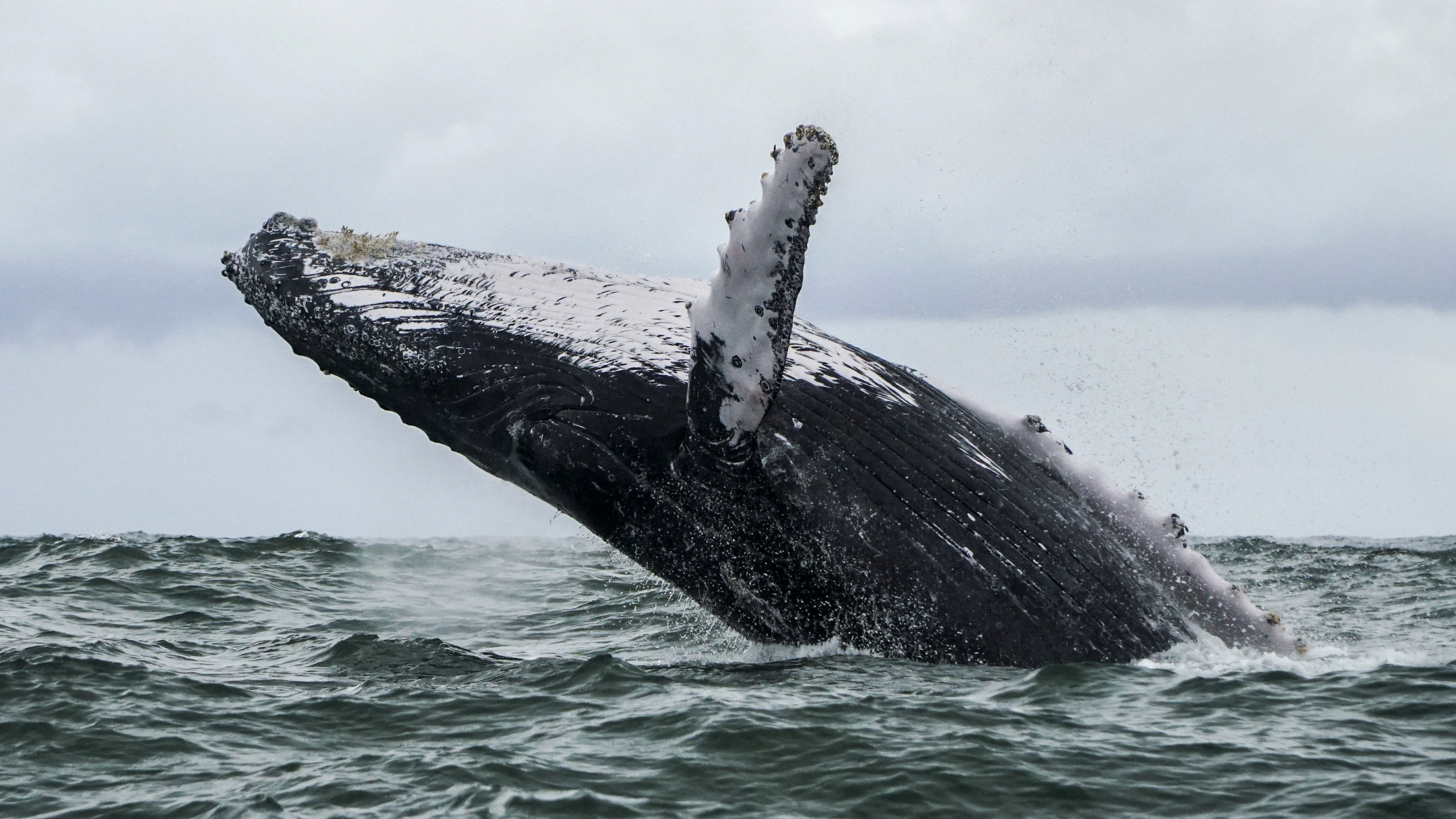 Oil Spill in Brazil Hits Breeding Grounds for Humpback Whales - Bloomberg