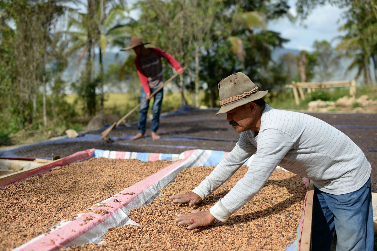 The World's Flush With Coffee, and Indonesia Wants to Add More