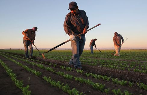 Migrant Workers Farm Crops In Southern CA