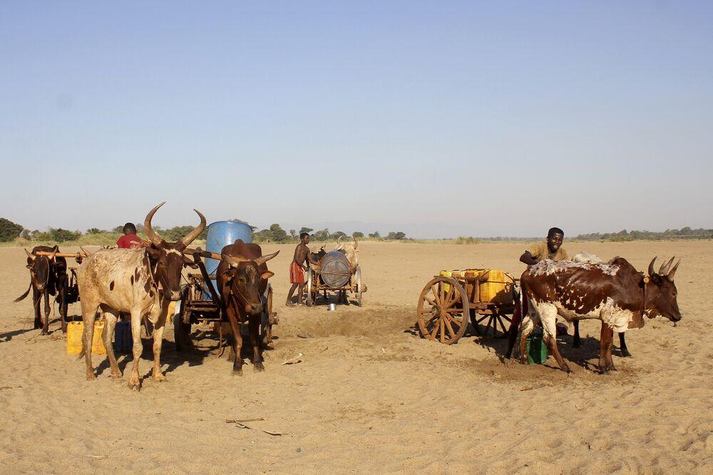 Men dig for water in the dry Mandrare river bedin Fenoaivo, Madagascar, in Nov.2020.