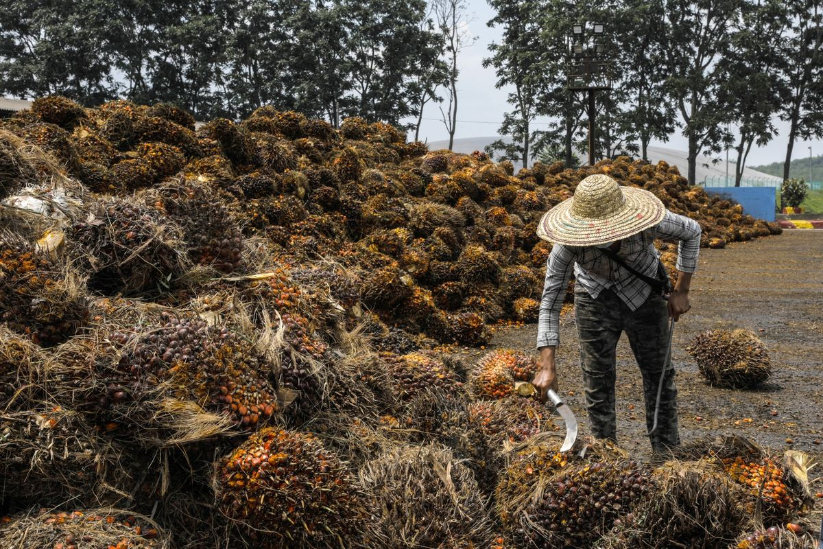bloomberg.com - U.S. to Block Palm Oil From Large Malaysian Producer