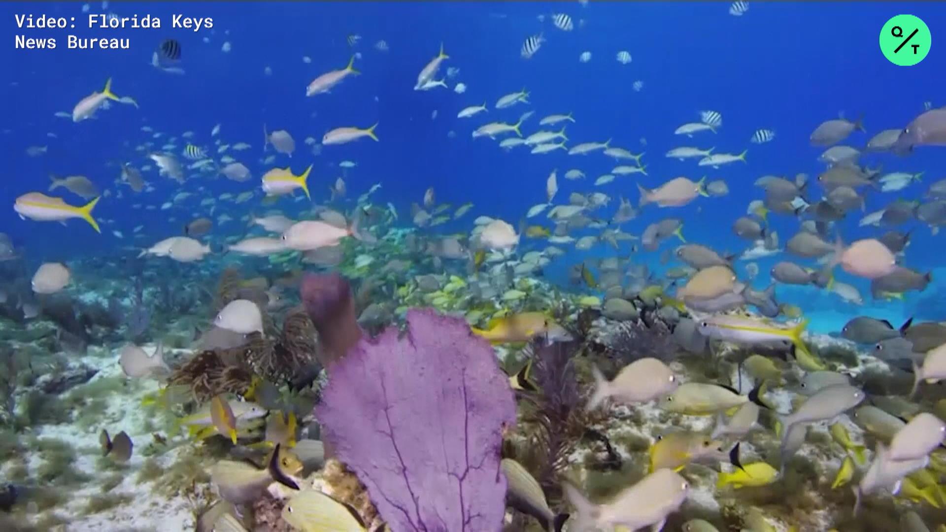 CLEAN: NOAA Coral Reefs Restoration