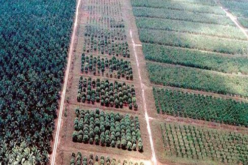 Green Groups Get a Big Win in the Palm Oil Wars