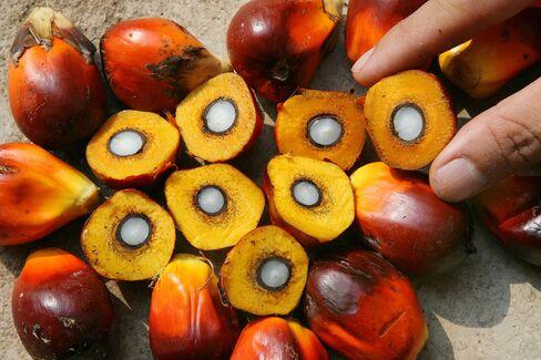 Bio Tech-Palm Oil Msia