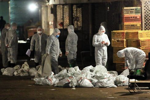 The Race to Contain Bird Flu in China