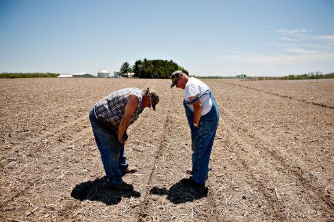 Farmers Inspect the Soil