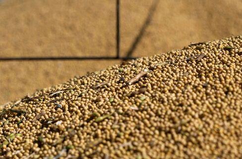 Soybean Stockpiles
