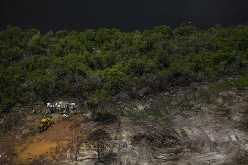 Mangrove trees at the border of Guanabara Bay.