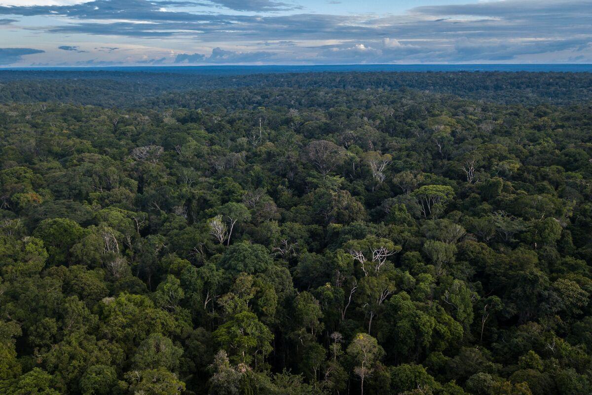 Brazil's Bolsonaro Defiant as Norway Freezes Rainforest Cash