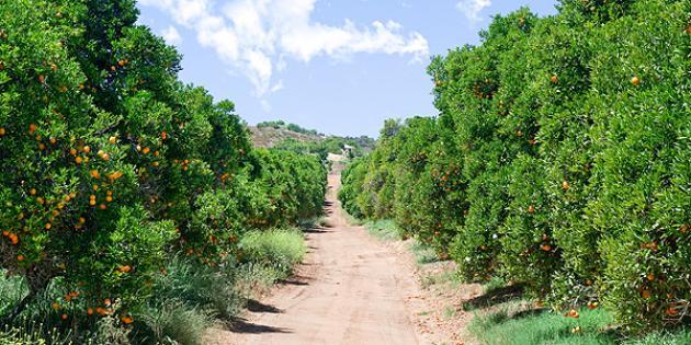 No. 16 Most Expensive Small Town: Rancho Santa Fe, Calif.
