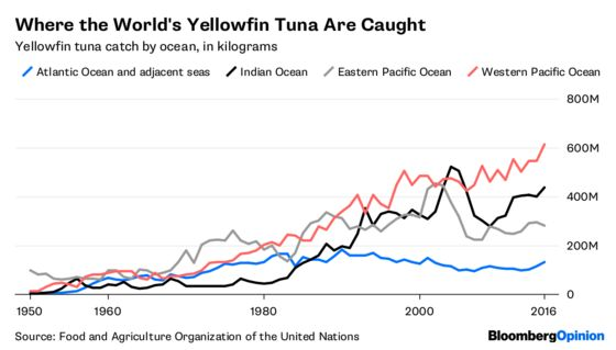 Your Poke Addiction Won't Drive Tuna Extinct