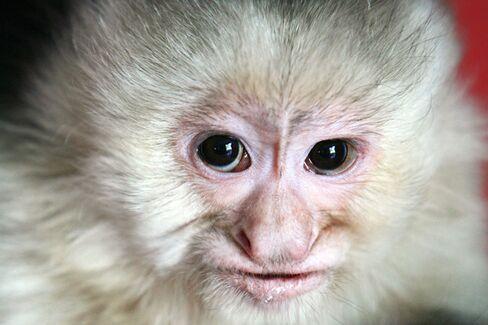 Odd Jobs: Private Monkey Trainer