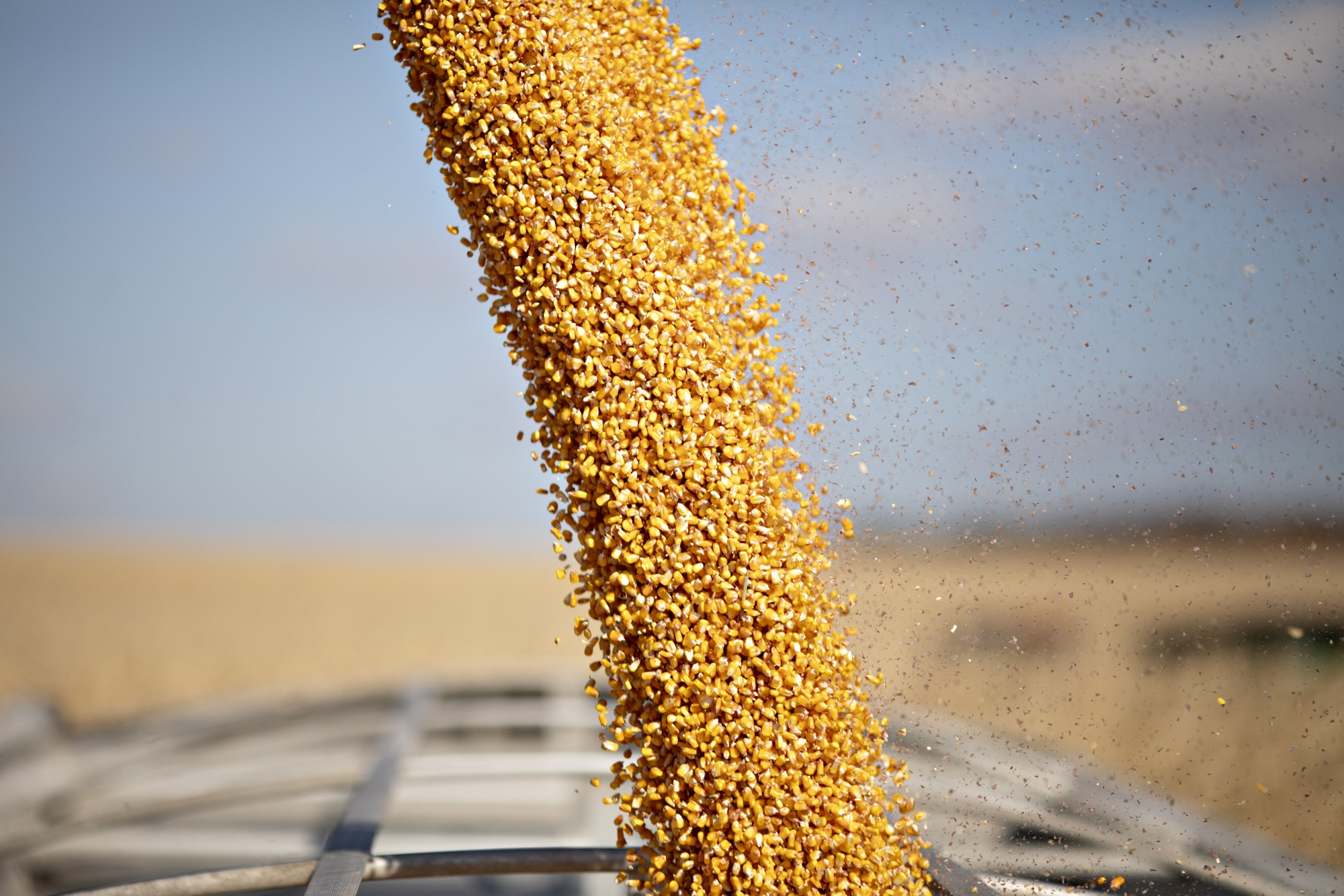 Corn is loaded into a semi-truck from a grain cart in Buda, Illinois.