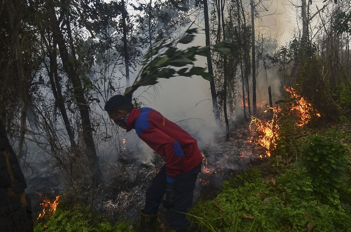 Indonesia Blames Planters for Raging Wildfires and Horrible Air Quality