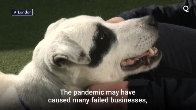 Pandemic Pets Are Being Returned