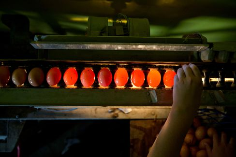 Eggs pass over an inspection light inside a barn at a certified organic, family-run farm in Sheffield, Ill.