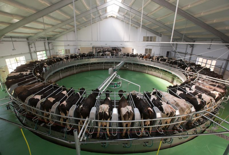 relates to Russia Is Importing Thousands of European Cows