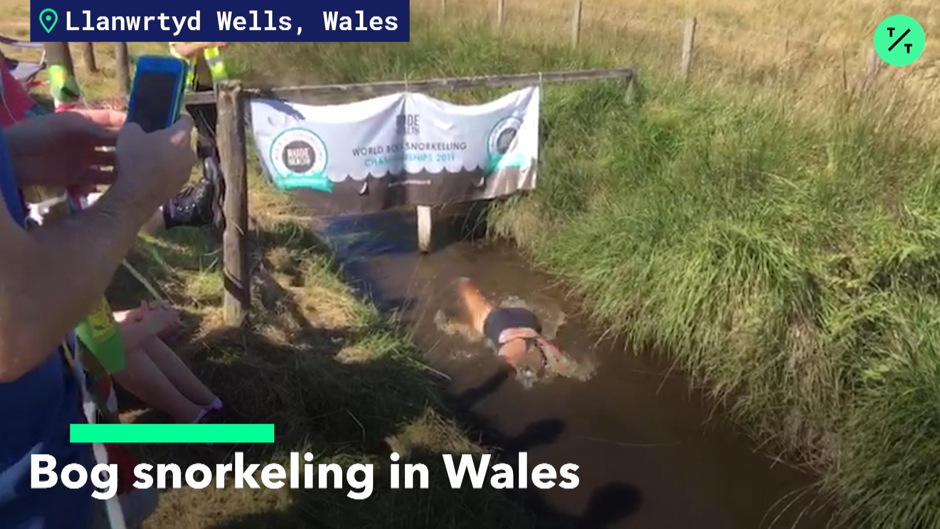 Bog Snorkeling in Wales