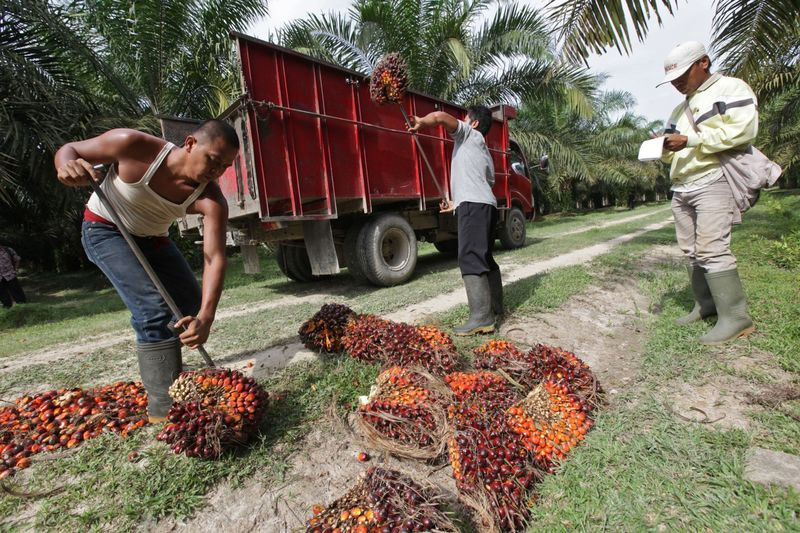 Images Of PT Bakrie Sumatera's Palm Oil, Rubber And Oleochemical Facilities