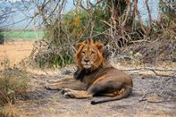 relates to Africa's Biggest Conservation Success Was Once a Poachers' Paradise