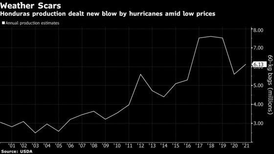 Honduras Coffee Growers Face Escalating Woes After Hurricanes