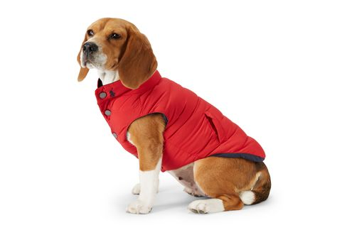 Quilted Dog Vest from Ralph Lauren Home.