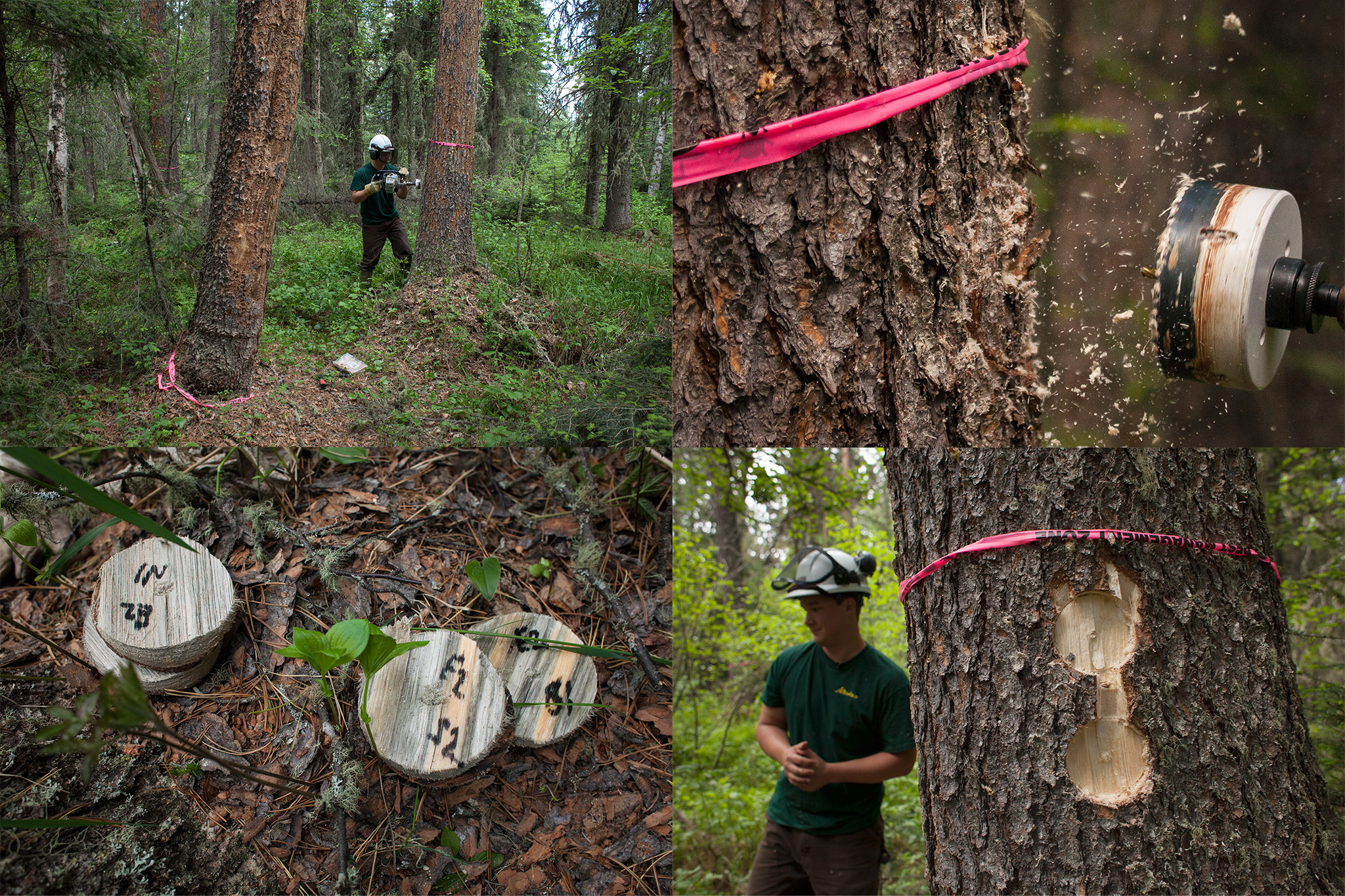 pine beetle essay Introduction the mountain pine beetle is one of the species of the bark beetle it is native to the forests which are located in western parts of north america, mexico, and central parts of british columbia.