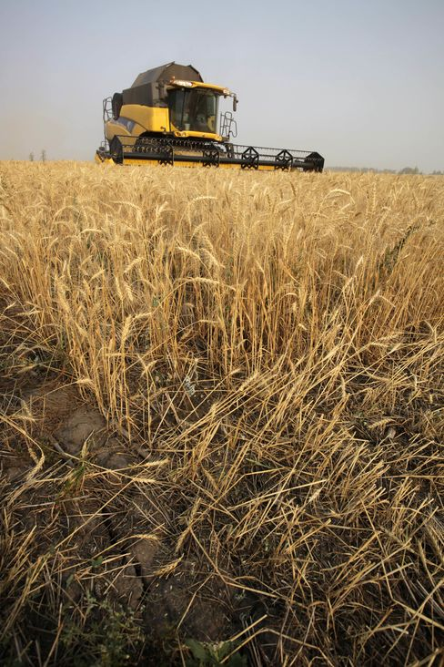 Wheat Advances as Russia Extends Export Ban