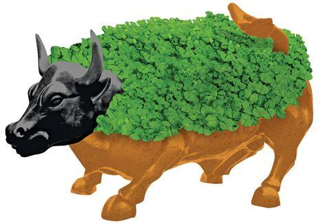 Chia Seeds, Wall Street's Stimulant of Choice