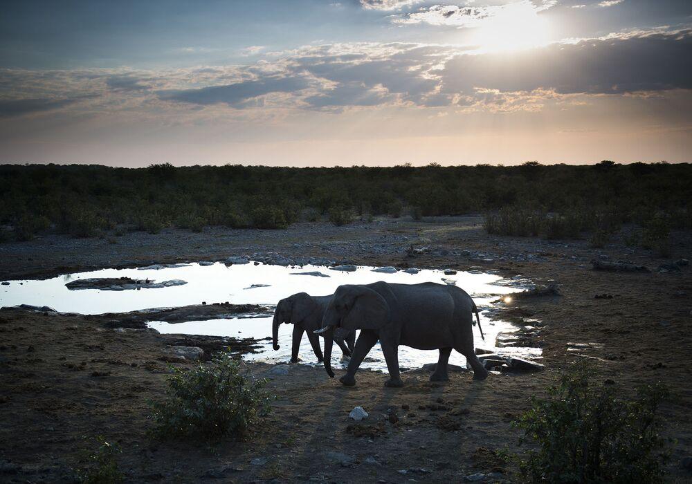 Słonie przy wodopoju w Namibii.