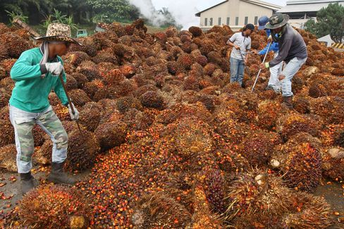 Tour of Felda Global Ventures Holdings Palm Oil Facilities