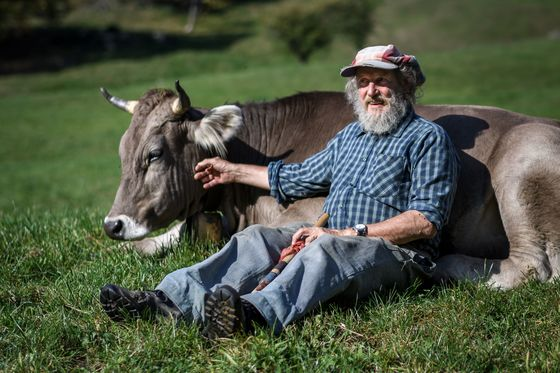 Switzerland Won't Reward Farmers That Let Cows Keep Their Horns