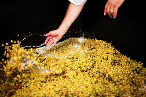 In the Hamptons on Long Island, N.Y., Channing Daughters Winery makes an orange wine from pinot grigio grapes.