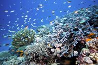 Reef scene with fish and corals