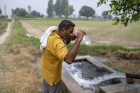 Indian Farmers Give New Crops a Cautious Try as Water Woes Rise
