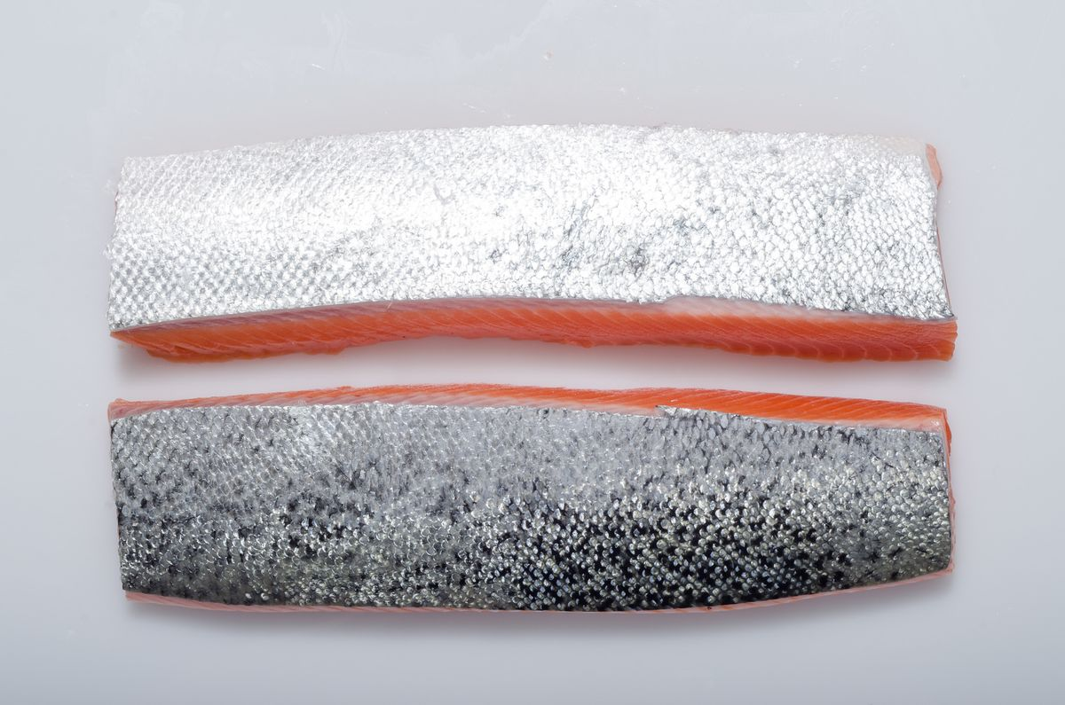 This Salmon Is the Wagyu Beef of the Seafood World