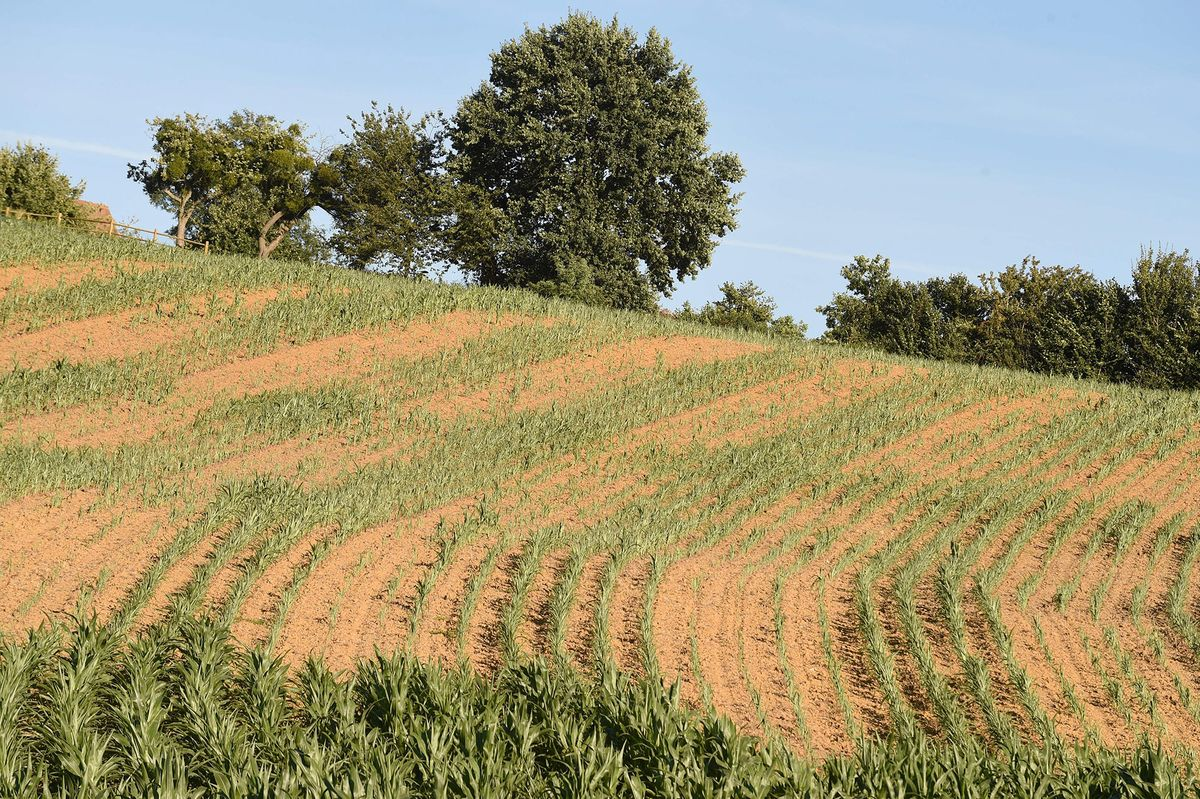 Satellite Data Fill the Void of Dwindling Crop Tours